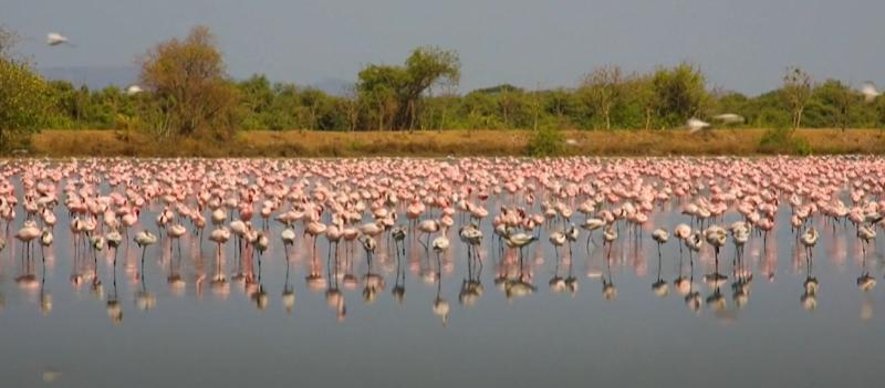 ▲印度這個季節是紅鶴尋找棲息的時候。(圖/翻攝自