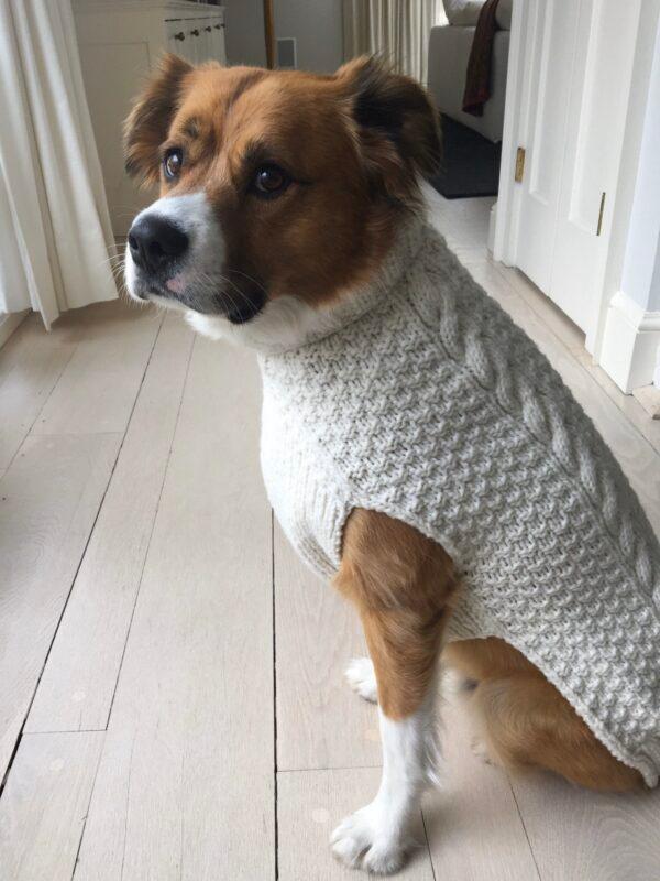 ▲克里斯伊凡愛犬曾經的帥氣模樣。(圖/翻攝自克里斯伊凡的推特)