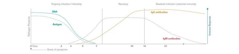 ▲IgM、IgG抗體在體內隨時間的消長。(圖/翻攝吳昌騰醫師臉書)