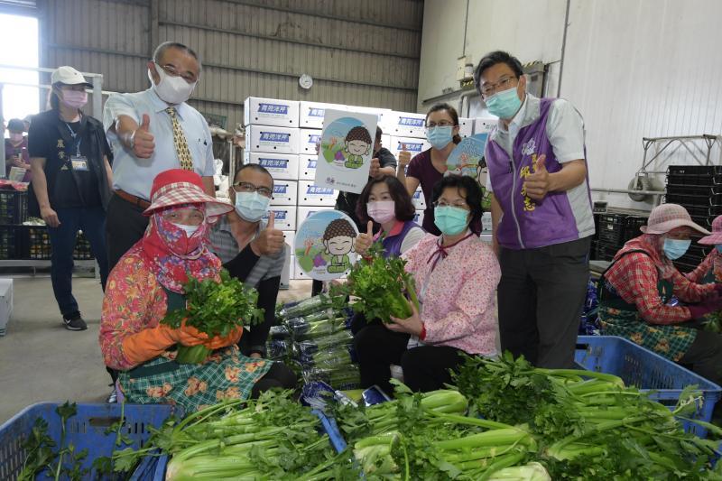 影/「綠金」!謝建復西洋芹銷遍東南亞市場