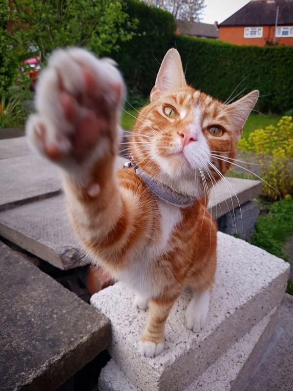 ▲格雷戈里養了一隻橘色虎斑貓「奧利」,牠相當挑食經常留下一堆剩飯,讓他非常傷腦筋(圖/IG@ollie_the_ginger_kitty)