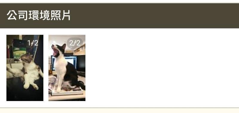 ▲有網友發現工作環境照片只有兩張貓照,笑說「工作環境看起來很好!!!」(圖/翻攝自貓咪也瘋狂)