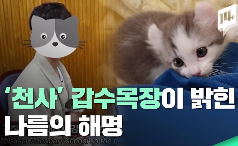 韓國獸醫生YouTuber為點閱涉虐貓 讓小貓挨餓、殘殺倉鼠