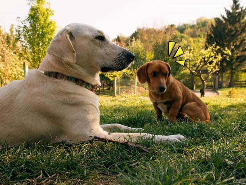 愛犬們出門放風 一轉眼竟帶「小弟」回家?