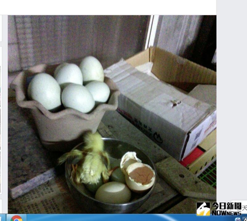 ▲謝秉辛把這一段奇「雞」分享在臉書,讓不少人感到真是奇「雞」。(圖/記者陳雅芳攝,2020.05.13)