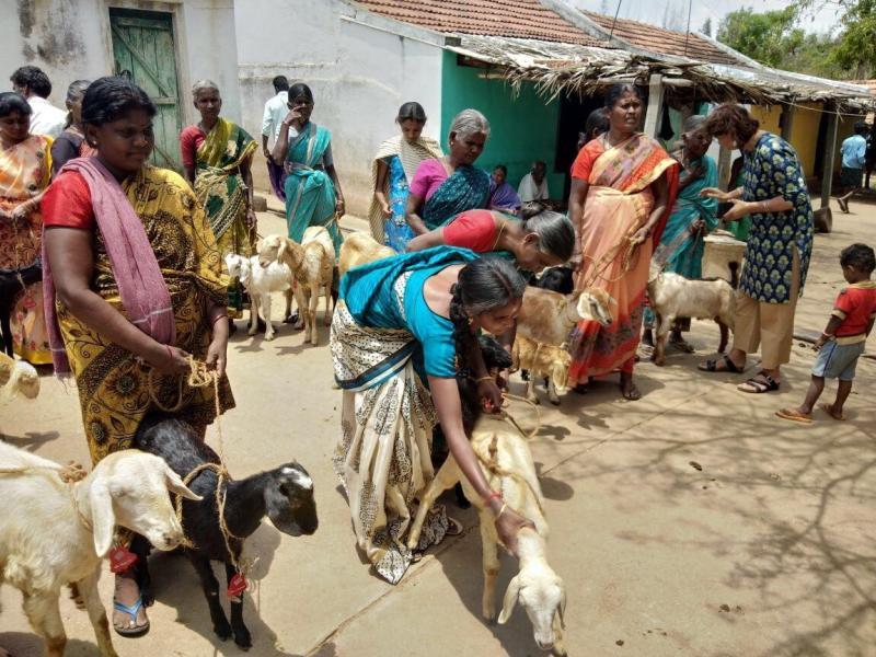 ▲許多印度宗族的婦女們,帶著自家的山羊前來參與「共同守護山羊健康專案」,此專案由百靈佳殷格翰的動物健康管理團隊與MMH計畫共同所發起。。(圖/MMH提供)