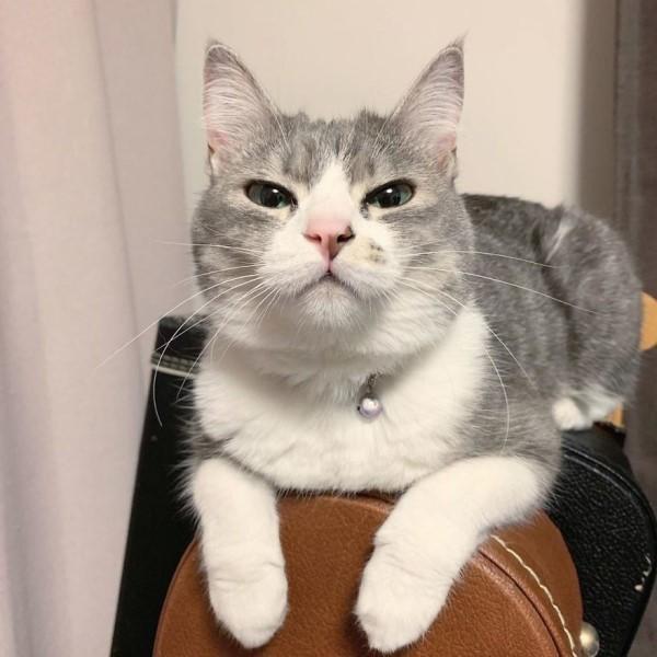 ▲貓咪:本宮沒允許的,你們絕對不能搶,聽懂沒?(圖/twitter@yoshi___ben)