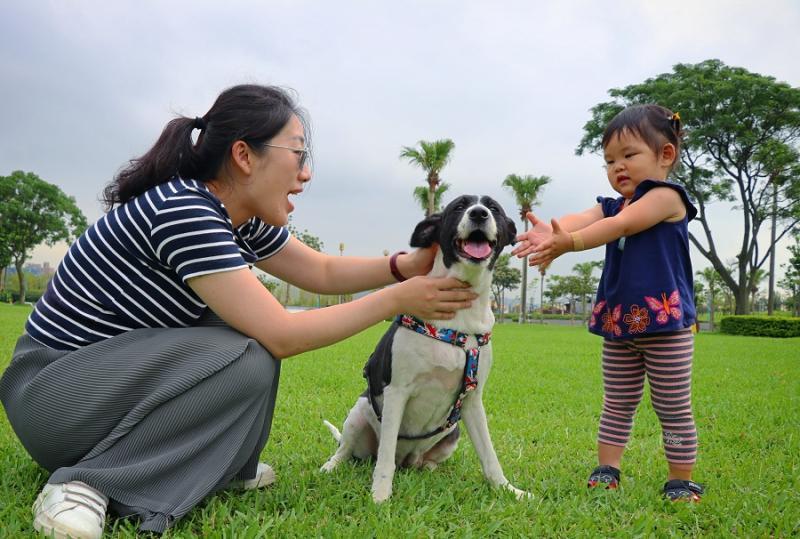 ▲7月推出動物輔導活動,請到專業動輔師引領可愛治療犬們與星兒互動。(圖/新北市文化局提供)