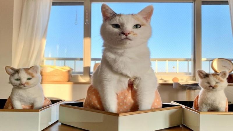 日本三花貓穿裙子超可愛 萌照背後竟有滿滿洋蔥!