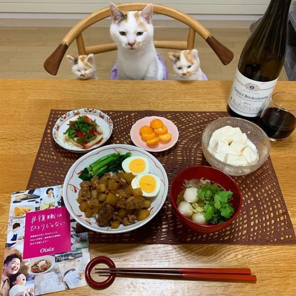 ▲Maru:奴才有準備本喵的晚餐嗎?(圖/IG@