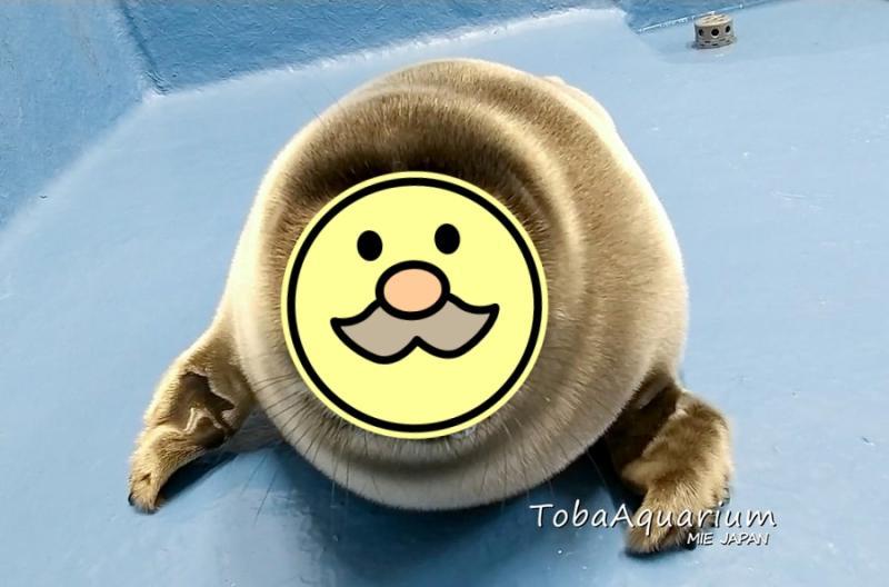 小海豹竟像阿伯?一看父母照網笑:親生的!