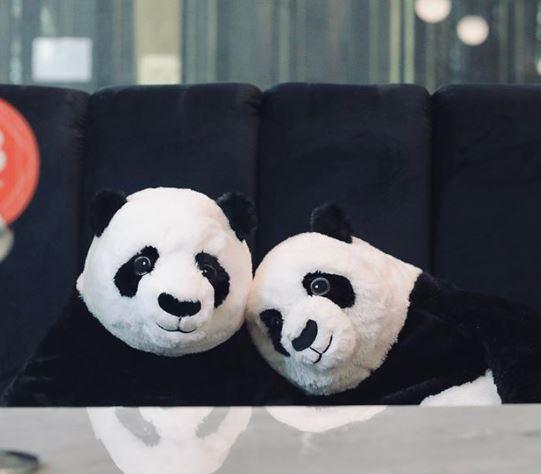 隔離吃飯太孤單? 到曼谷餐廳與熊貓共進晚餐