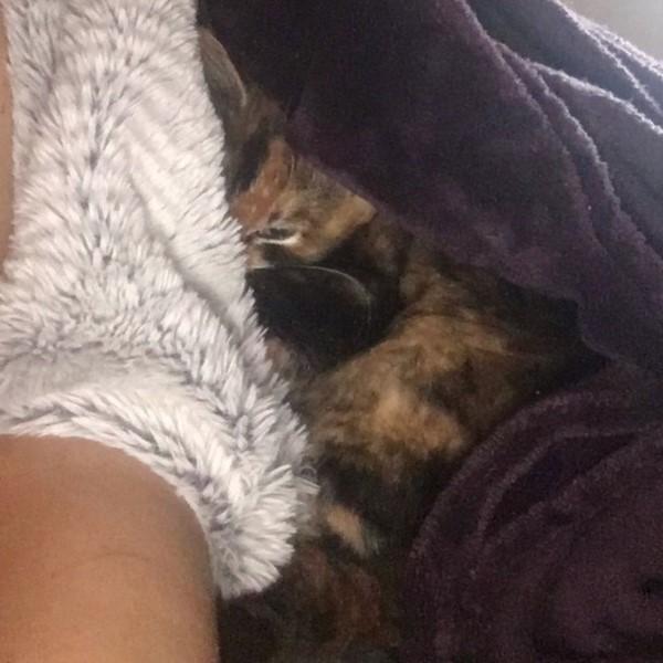 ▲吃飽喝足又洗澎澎之後,小貓就窩在艾登的身旁睡覺(圖/Love