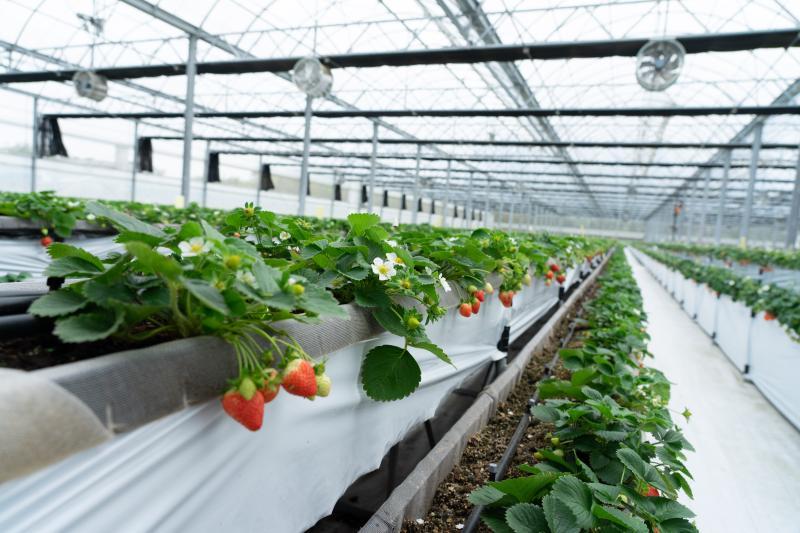 <b>初聲</b>/手機種菜不是夢 初露鋒芒的台灣農業數位轉型