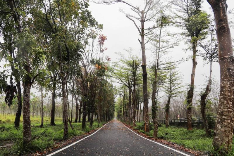 初聲/萬巒居民堅守廿年樹林 <b>台糖</b>農電共生專區難協議