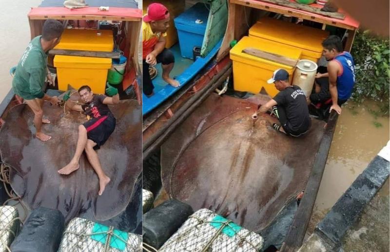 漁民捕獲4公尺巨型魟魚!爽拍合照曝光遭撻伐:不該如此