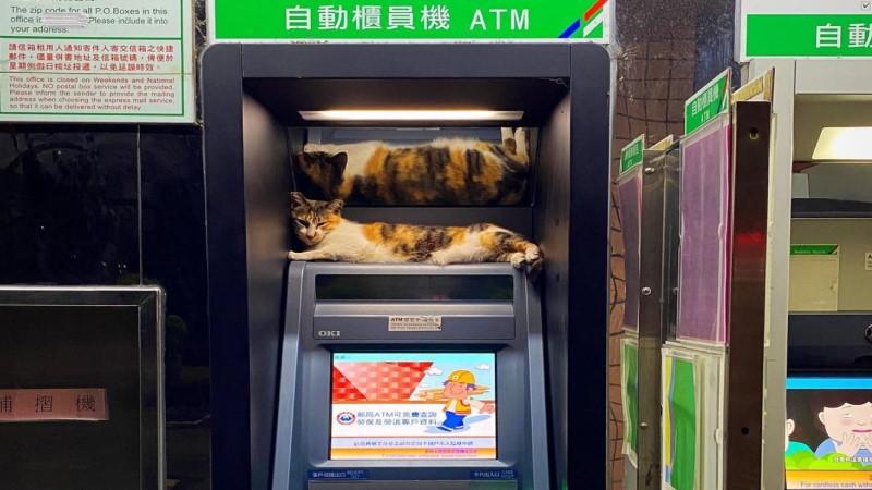 男子到ATM領錢 遇三花貓躺機台網笑:牠要收手續費啦!