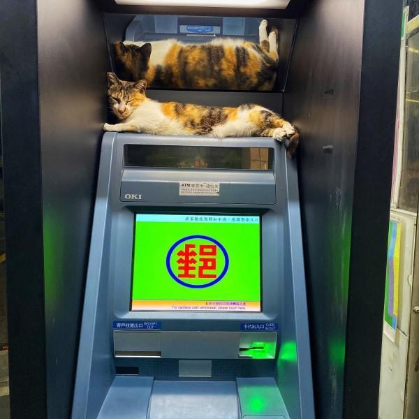 ▲網友黃先生日前到ATM領錢時,遇見一隻三花貓躺在機台上(圖/網友黃孟哲授權提供)