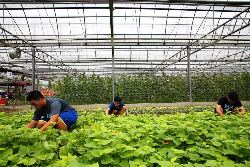 ▲嘉大新民校區自然農法學園溫室。(圖/嘉義大學提供)
