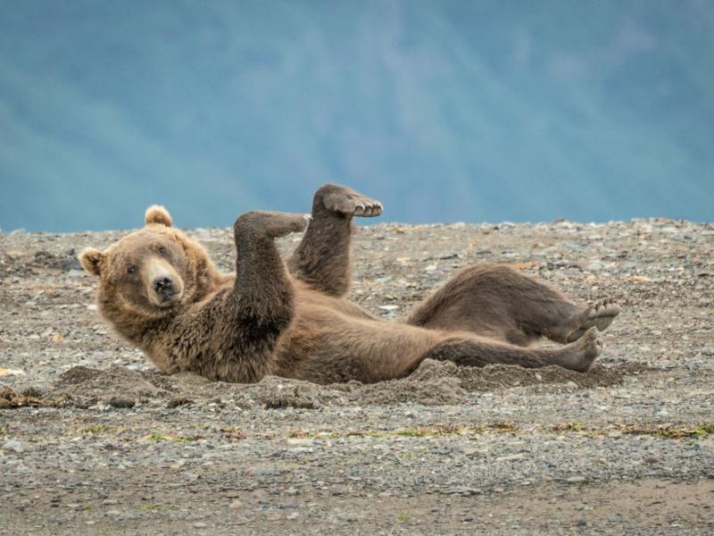另類攝影獎逗趣瞬間大公開 動物界的諧星全在這啦!