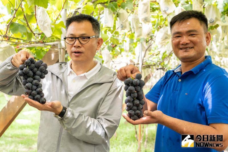 影/台灣<b>葡萄</b>最大產地 張乘瑜行銷彰化<b>葡萄</b>紫金傳奇