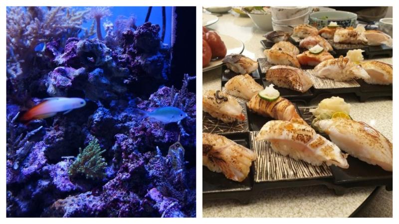 動保團體抗議水族館賣海鮮太慘忍!網友「神譬喻」狠酸