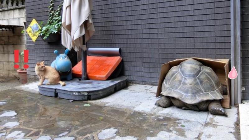浪貓進庭院避雨 沒多久紙箱被塞爆驚:「石頭」會動?