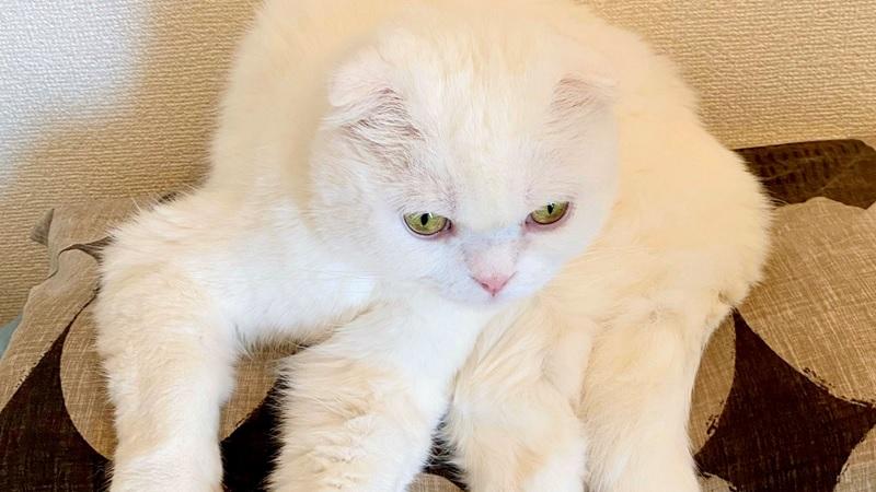 貓進化成新品種生物「白色狼蛛」 網嚇:好可怕!