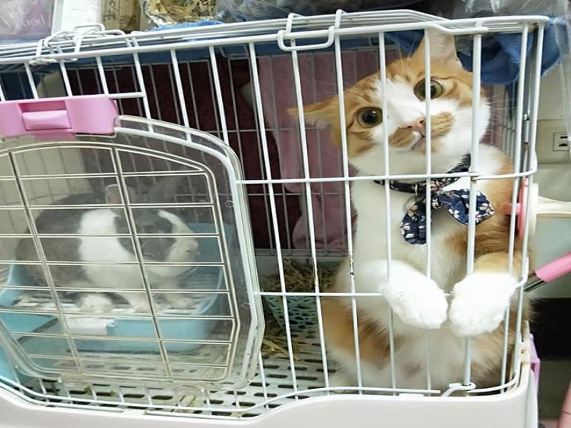 主人放飯見「<b>口罩貓</b>」裝無辜 嘆:別裝兔子那不是你家!