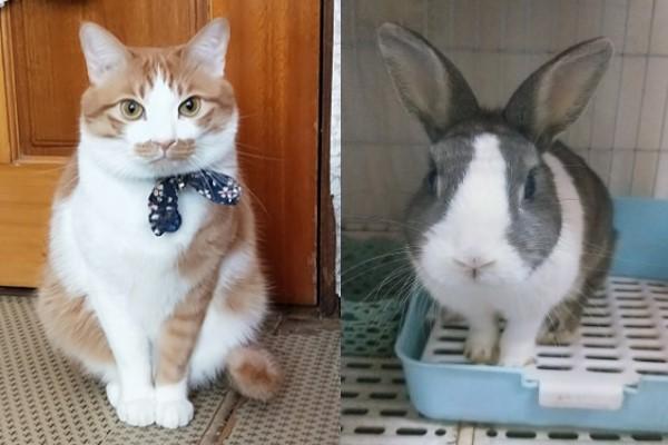 ▲網友葉小姐飼養一隻橘白貓「小小」與兔子「Bebe」(圖/IG@small_bebe2020授權提供)