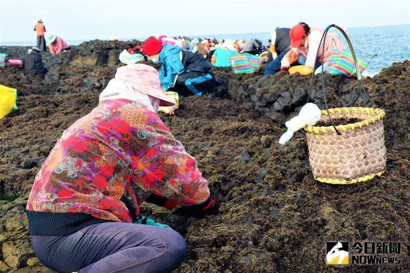 ▲澎湖海蝕平台所生長的紫菜,是台灣產量最多、質地優良的品種,白沙鄉的姑婆嶼、屈爪嶼、空殼嶼等地為野生紫菜的故鄉。(圖/記者張塵攝,2020.05.30)