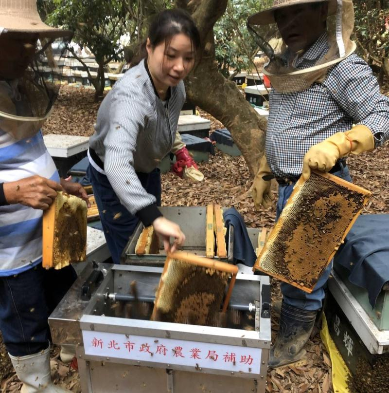 ▲新北市的女青農孫霞來自湖南,與夫婿一起經營昌輝養蜂場,打造高品質的蜂蜜(圖/新北農業局提供)