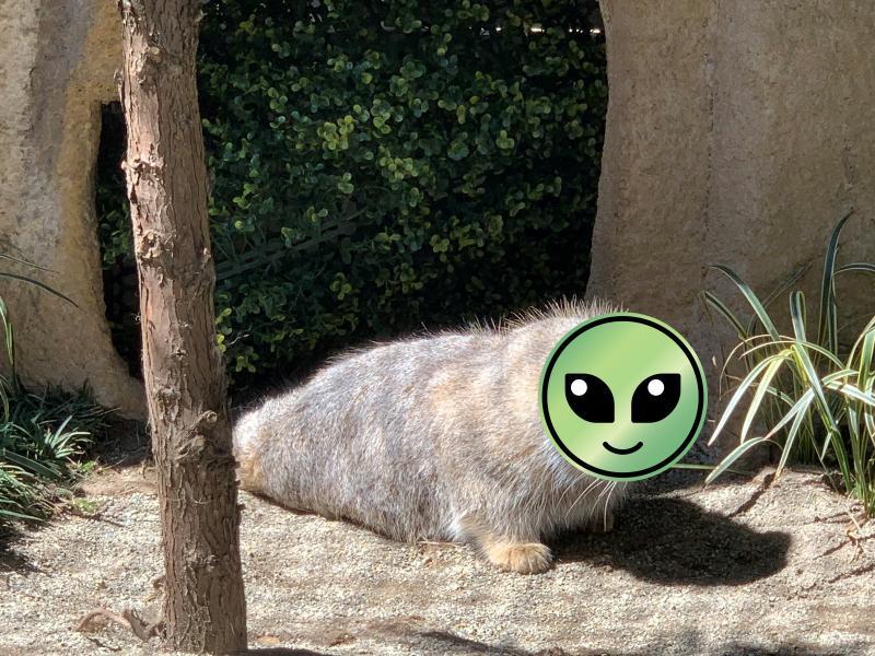出現了!動物王國發現新物種 「毛茸茸海豹」瞬間成話題