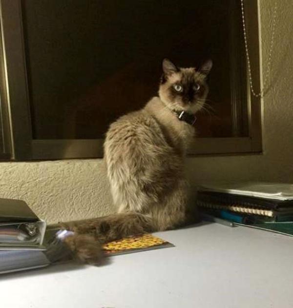 ▲貓咪尼洛從小由海克特養大。(圖/Héctor