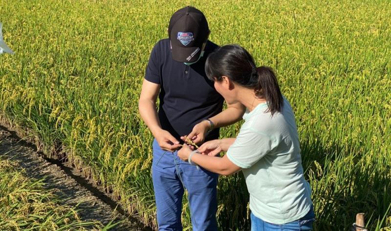 ▲立委劉建國了解目前水稻空包彈的情形。(圖/記者蘇榮泉攝,2020.06.02)