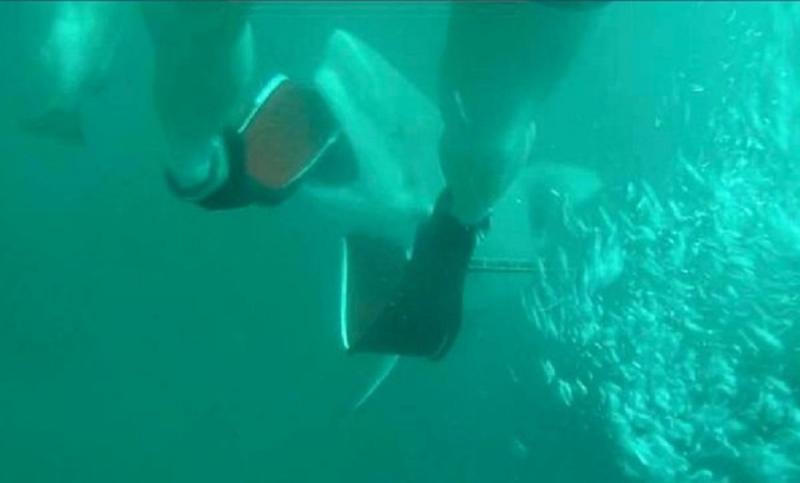 ▲18歲澳洲男子皮耶遭到公牛鯊襲擊。(圖/翻攝Lachlan Pye臉書)