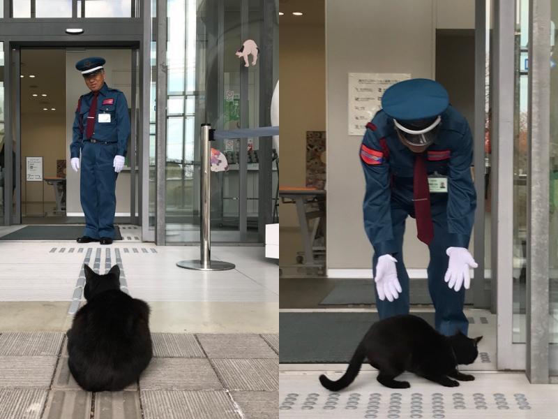 「貓與警衛攻防戰」背後原因不單純 喵:朕挑人的!