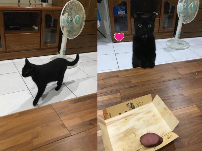 黑貓想偷吃便當香腸 女子:你不能吃!等等我沒養貓啊!