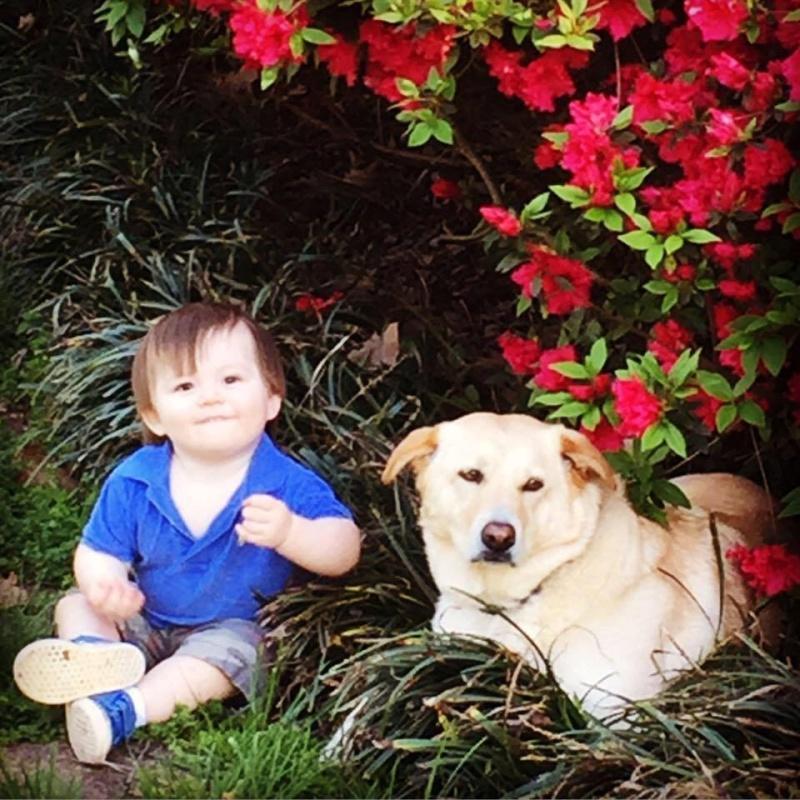 ▲拉布拉多混種犬絲凱勒從小被羅蘋領養,現在已經是隻老狗了。(圖/Facebook@Robin