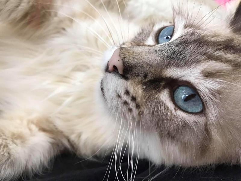 女子告別15歲老貓 當天竟遇中途貓深情看她:我來陪妳!