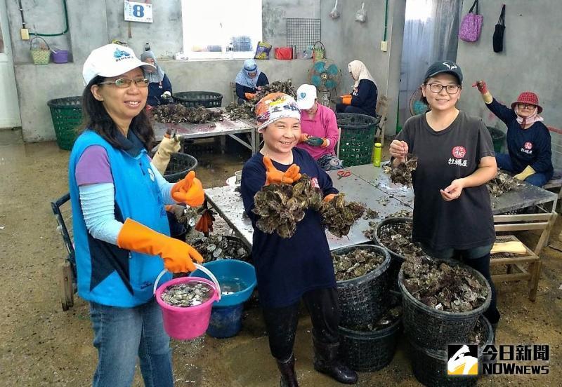▲澎湖生產的蚵仔都是「吹著冷氣的牡蠣」,工廠裡面有10幾位拿著「鋟蚵仔」工具的澎湖漁村婦女,勤奮快速的剝著一顆顆飽滿的蚵仔。(圖/記者張塵攝,2020.06.05)
