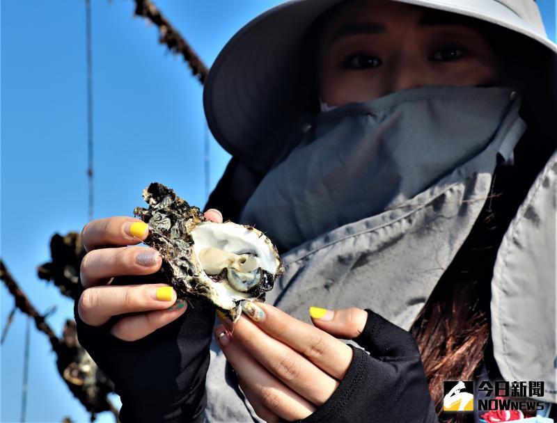 吹冷氣的牡蠣 澎海洋牧場「蚵仔吃到飽」行程正夯