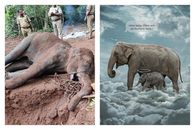 ▲印度一隻懷孕的母象被人餵食「塞鞭炮鳳梨」慘死,新聞曝光後在網路引發出創作潮,大家都很震驚這樣的悲劇。(圖/翻攝自 BoredPanda)