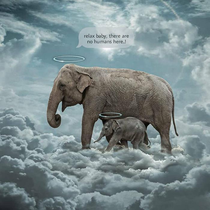 ▲母象之死引發網友紛紛創作圖文致哀。(圖/翻攝自