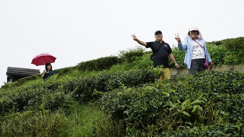 ▲茶園步道讓遊客可以更深度體驗雲林脊梁山脈風光。(圖/記者蘇榮泉攝,2020.06.06)