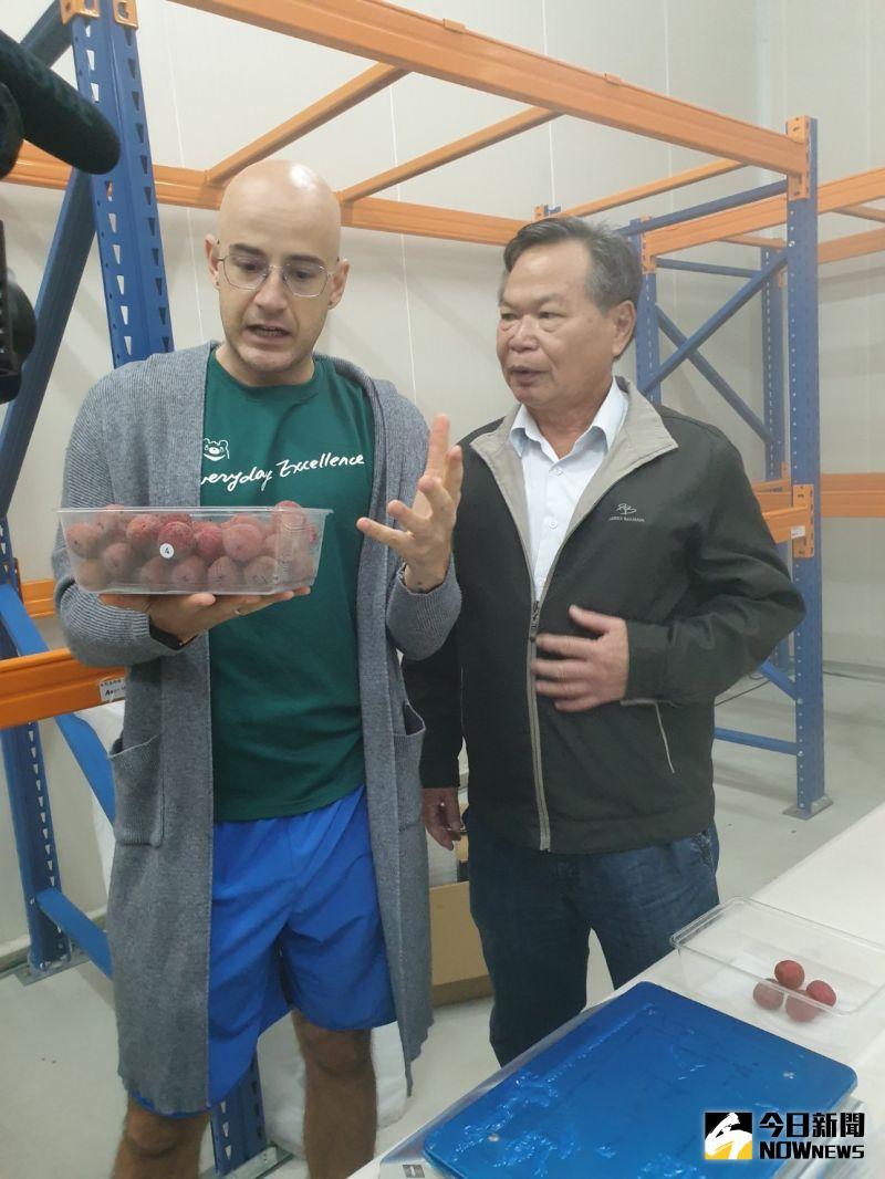 ▲首度在國內賣場上架販售的台中冷鏈荔枝,一公斤裝只要99元,較在新加坡行情便宜一半,真的是好吃又便宜。(圖/金武鳳攝,2020.6.14)