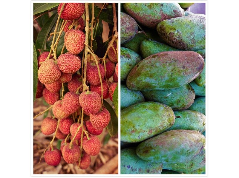 ▲有網友在 PTT 詢問大家「芒果和荔枝誰才是水果霸主?」掀起討論。(圖/取自pixabay)