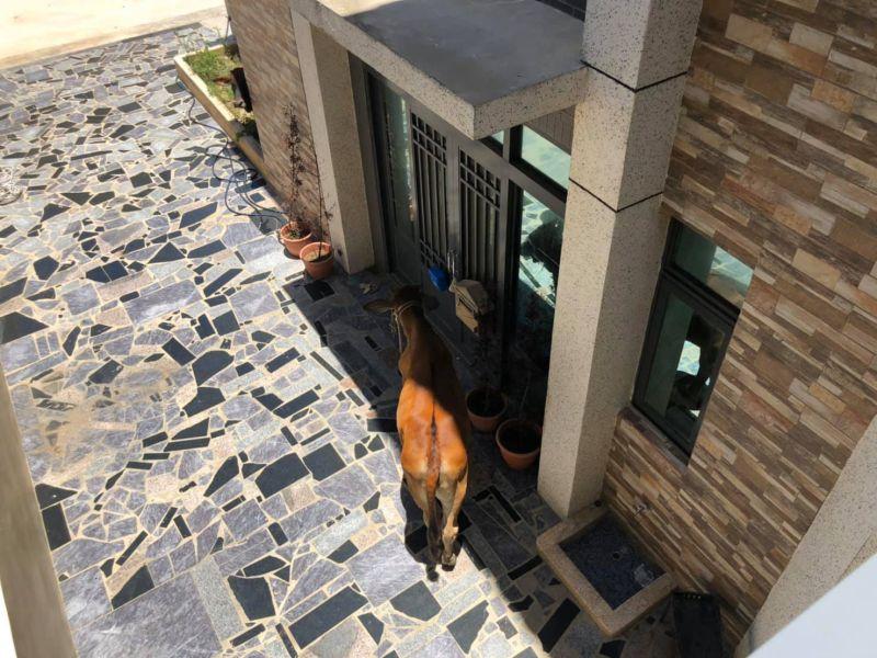 ▲一名女網友在臉書社團《爆怨公社》表示,一回到家看見一隻野生的大黃牛,站在家門前陰影處望向她,瞬間哭笑不得。(圖/翻攝自爆怨公社)