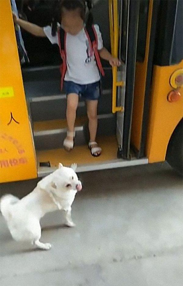 ▲開心的狗狗大力地搖著尾巴,歡迎小女孩回來。(圖/抖音@语汐妈妈)