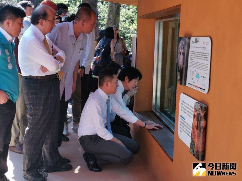 ▲副總統賴清德前往新竹動物園參觀,他說,動物園整修後,變得寬敞又新穎,逛起來輕鬆自在。(圖/記者金祐妤攝,109.6.16)
